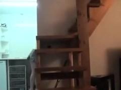 Spy Kitty copulates cute plumber
