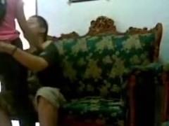 Indonesian  immature Jilbaber