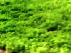 Chick running